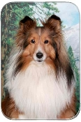 SHELTIE WITH TREES