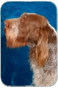 SPINONE WITH BLUE BACKGROUND