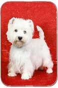 WEST HIGHLAND TERRIER RED BACKGROUND