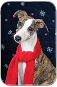 WHIPPET PUPPY WITH SCARF